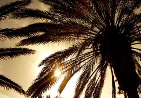 Mattresses palm leaves