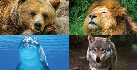 Do You Sleep Like A Bear A Lion A Dolphin Or A Wolf
