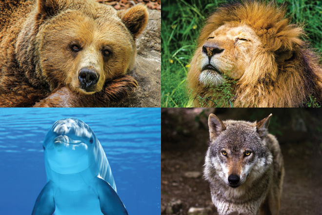 Do you sleep like a bear, a lion, a dolphin or a wolf?