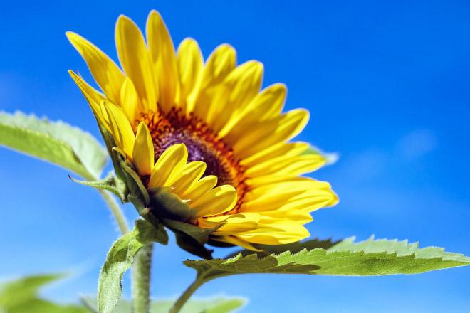 Melatonin natural methods: a sunbath