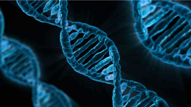 "The ""ABCC9"" Gene"